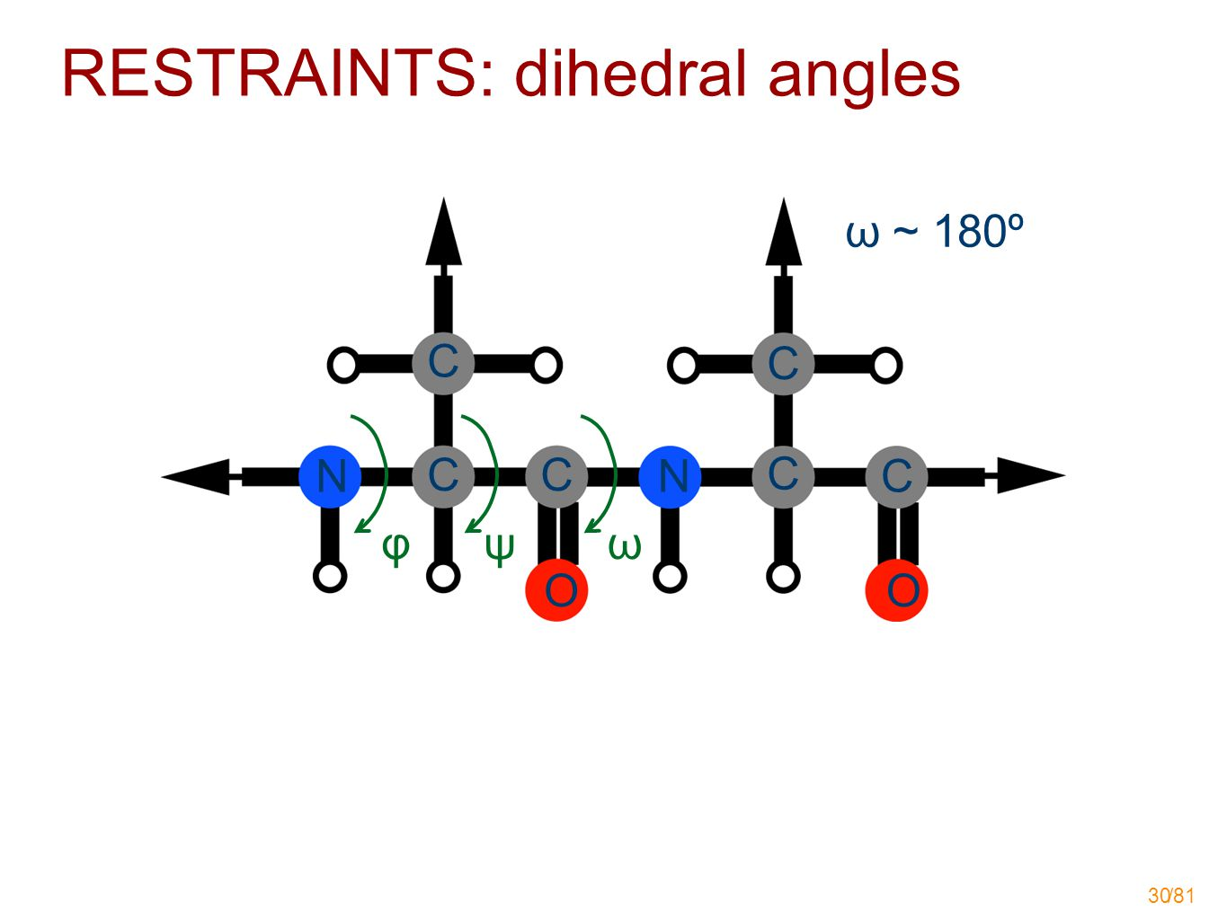 /81 30 φ ω ~ 180º NN CC C C C C OO ψω RESTRAINTS: dihedral angles