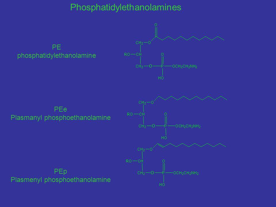 PE phosphatidylethanolamine PEe Plasmanyl phosphoethanolamine PEp Plasmenyl phosphoethanolamine O P O HO CH 2 CH CH 2 RO O O OCH 2 CH 2 NH 2 O CH 2 CH CH 2 RO O P O HO OCH 2 CH 2 NH 2 O CH 2 CH CH 2 RO O P O HO OCH 2 CH 2 NH 2 Phosphatidylethanolamines