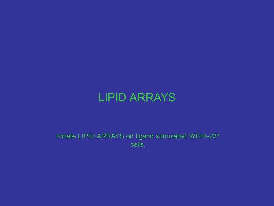 LIPID ARRAYS Initiate LIPID ARRAYS on ligand stimulated WEHI-231 cells.