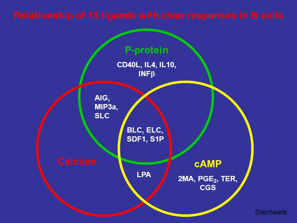 cAMP 2MA, PGE 2, TER, CGS P-protein CD40L, IL4, IL10, INF  Calcium AIG, MIP3a, SLC LPA BLC, ELC, SDF1, S1P Relationship of 15 ligands with clear responses in B cells Sternweis
