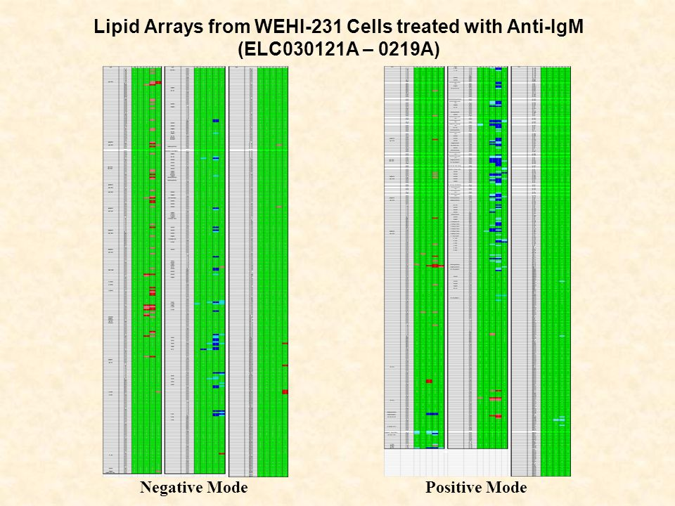 Lipid Arrays from WEHI-231 Cells treated with Anti-IgM (ELC030121A – 0219A) Negative ModePositive Mode