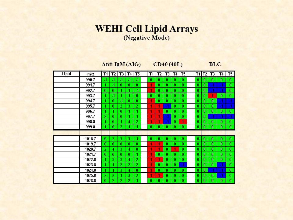 CD40 (40L)Anti-IgM (AIG)BLC WEHI Cell Lipid Arrays (Negative Mode)