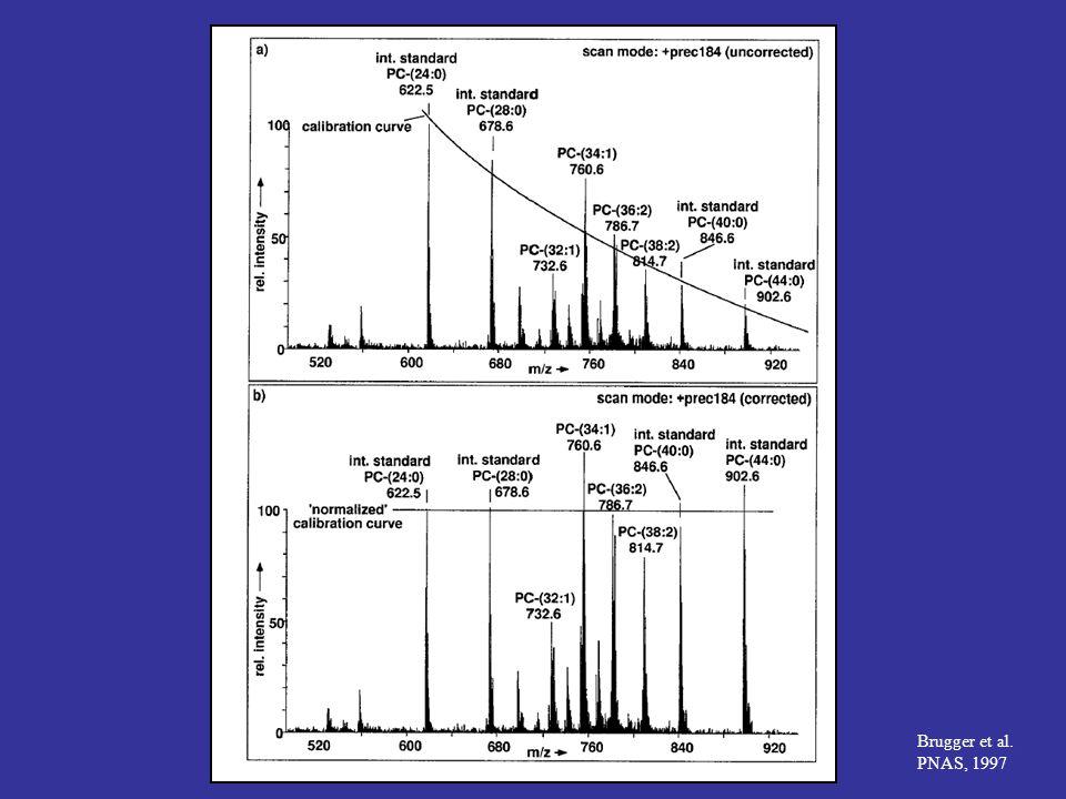Brugger et al. PNAS, 1997