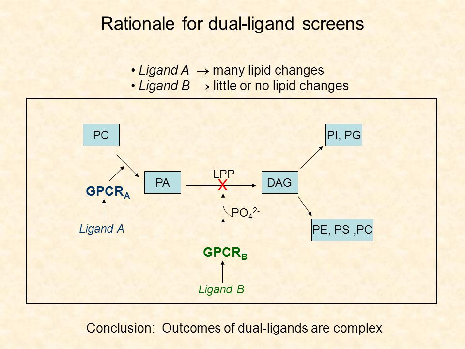 Rationale for dual-ligand screens Ligand A  many lipid changes Ligand B  little or no lipid changes Conclusion: Outcomes of dual-ligands are complex PC PADAG PI, PG PE, PS,PC LPP GPCR B X PO 4 2- Ligand B GPCR A Ligand A