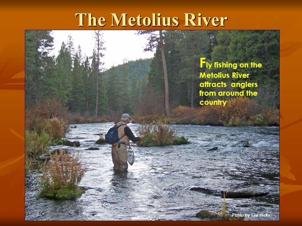The Metolius River F ly fishing on the Metolius River attracts anglers from around the country Photo by Lee Hicks