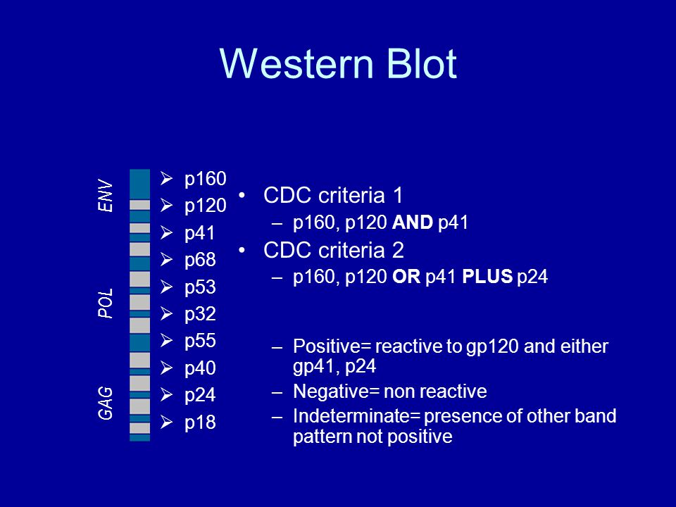 Western Blot CDC criteria 1 –p160, p120 AND p41 CDC criteria 2 –p160, p120 OR p41 PLUS p24 –Positive= reactive to gp120 and either gp41, p24 –Negative= non reactive –Indeterminate= presence of other band pattern not positive  p160  p120  p41  p68  p53  p32  p55  p40  p24  p18 GAG POL ENV