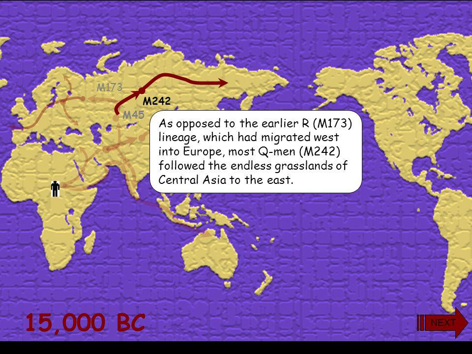 yDNA Haplogroup Q