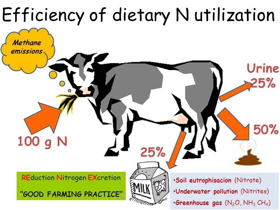 Ruminants Use fiber and non-protein N Pastures no suitable for crops Crop residues Industrial by-products