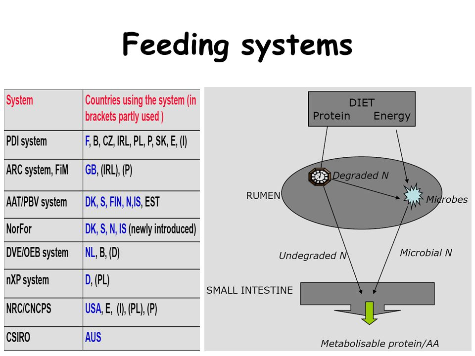 Dynamic approach for feed evaluation: In vivo measurements fraction a Immediately degraded fraction b Degradable but not soluble 0 2 4 6 8 12 24 Incubation time 48h Disappeared (%) 0% 100% value c Degradation rate of b Undegraded ParameterAbbreviationMethod Water soluble CPCP WS Water Total tract CP digestibilityCP TTD Mobile bag (Duodenum-faeces) Rumen degradation pattern DM, CP and NDFa, b, c and EDIn situ or in sacco method Effective Degradability (Ørskov and McDonald 1979) ED = a + b [c / (c + k)] k= rumen outflow rate DM, CP = 5%/h (2%/h for NDF) RRT of DM, CP = 20h (50h for NDF)