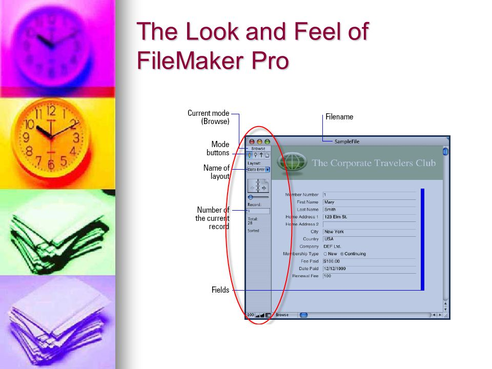 The Look and Feel of FileMaker Pro
