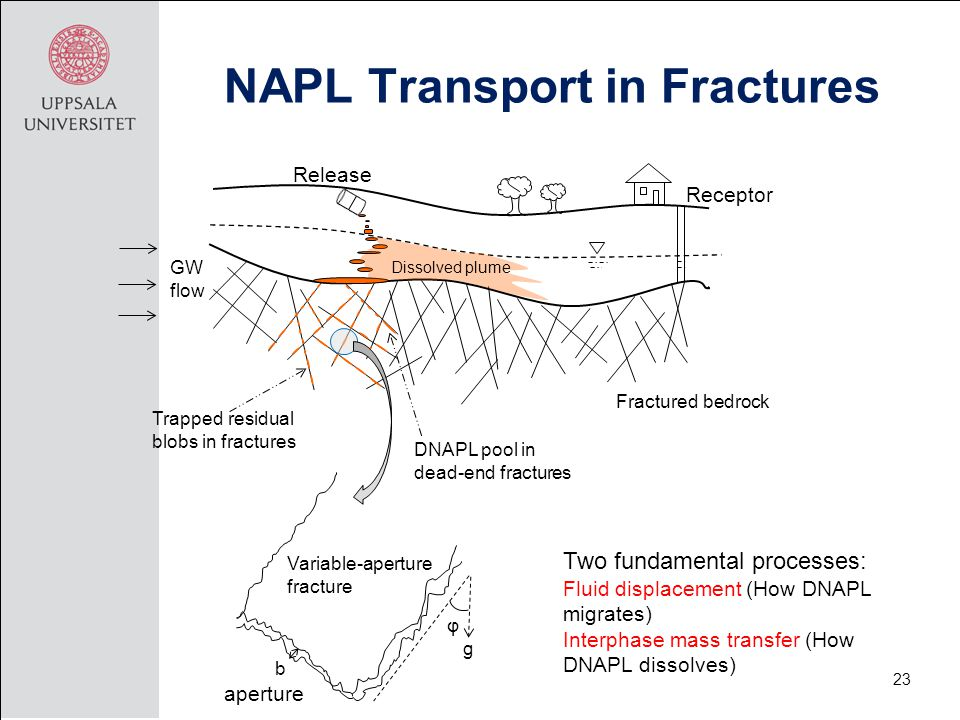 NAPL Transport in Fractures 23 Release Receptor Dissolved plume Trapped residual blobs in fractures DNAPL pool in dead-end fractures GW flow Fractured bedrock Two fundamental processes: Fluid displacement (How DNAPL migrates) Interphase mass transfer (How DNAPL dissolves) Variable-aperture fracture b g φ aperture