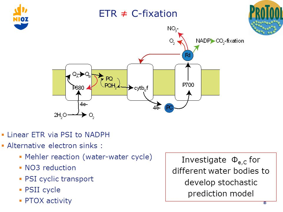 ETR ≠ C-fixation 8  Linear ETR via PSI to NADPH  Alternative electron sinks :  Mehler reaction (water-water cycle)  NO3 reduction  PSI cyclic transport  PSII cycle  PTOX activity 8 Investigate Φ e,C for different water bodies to develop stochastic prediction model