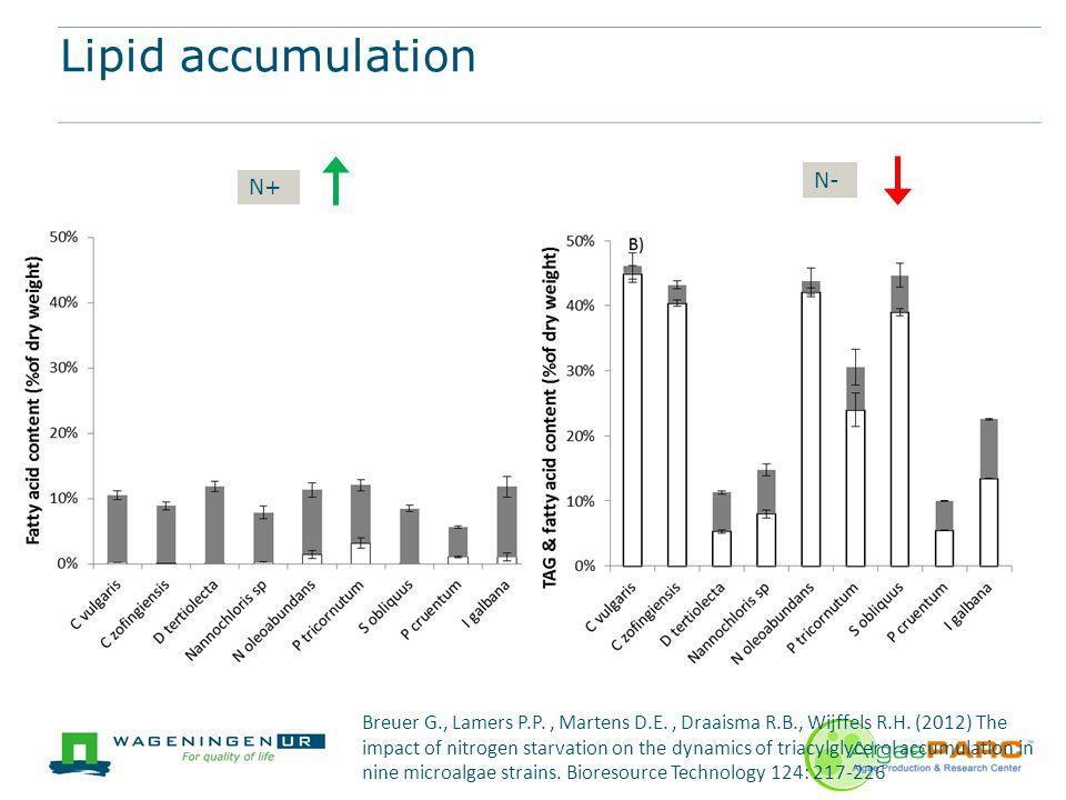Lipid accumulation N+ N- Breuer G., Lamers P.P., Martens D.E., Draaisma R.B., Wijffels R.H. (2012) The impact of nitrogen starvation on the dynamics o