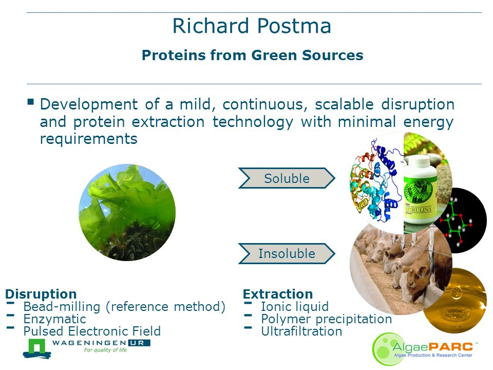 Richard Postma Proteins from Green Sources  Development of a mild, continuous, scalable disruption and protein extraction technology with minimal ene