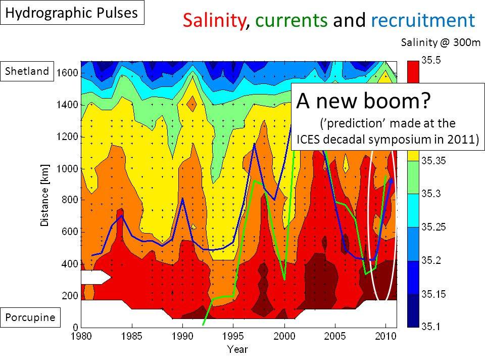 Porcupine Shetland Salinity @ 300m Hydrographic Pulses A new boom? ('prediction' made at the ICES decadal symposium in 2011) Salinity, currents and re