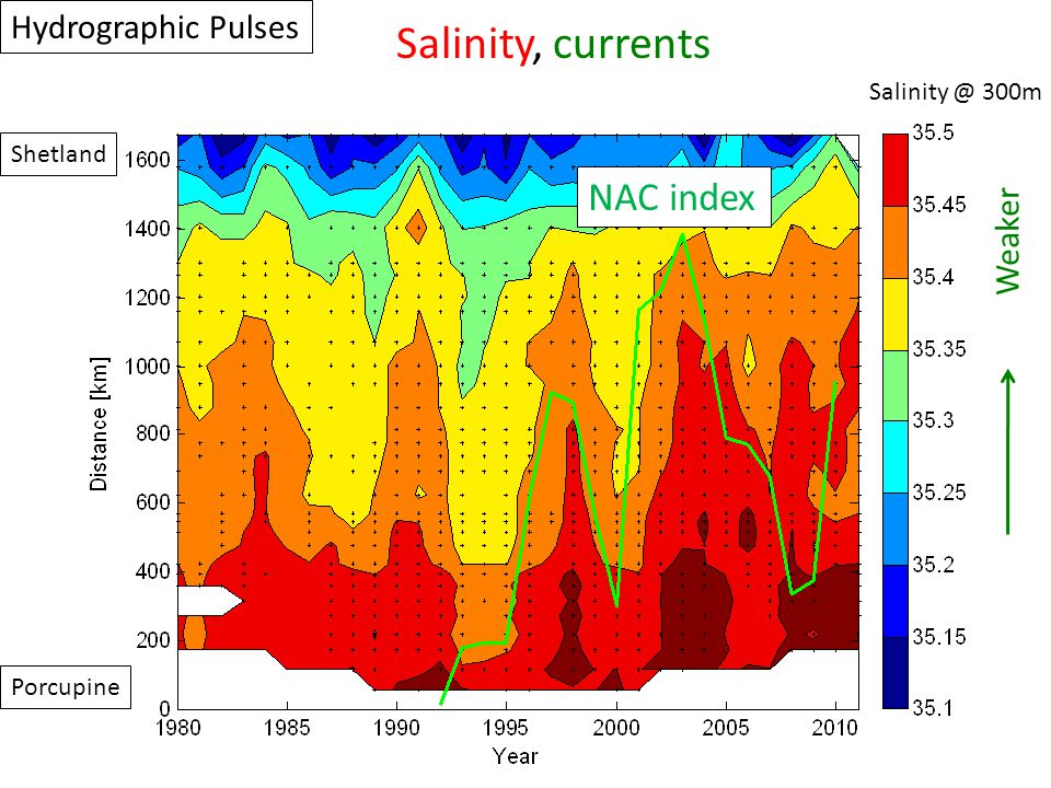 Porcupine Shetland Salinity @ 300m Hydrographic Pulses Salinity, currents Weaker NAC index