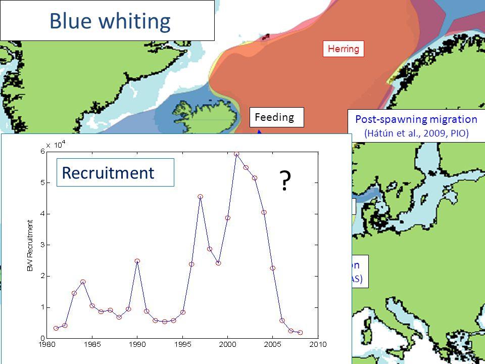 Blue whiting Spawning distribution (Hátún et al., 2009, CJFAS) Mackerel Herring Feeding Post-spawning migration (Hátún et al., 2009, PIO) Recruitment ?