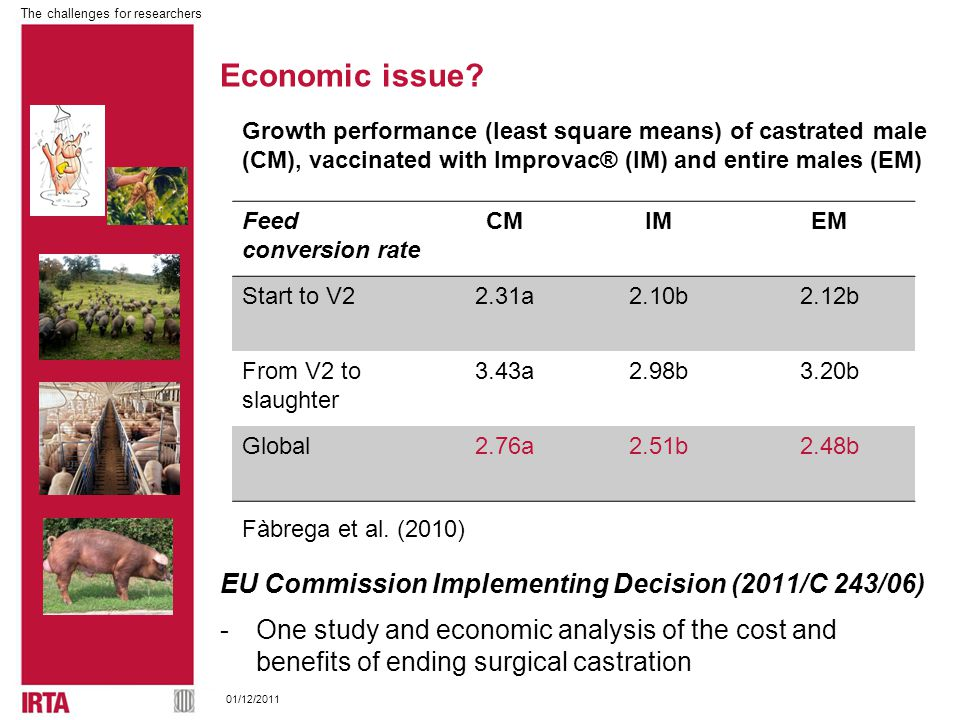 The challenges for researchers 01/12/2011 EU Commission Implementing Decision (2011/C 243/06) -One study and economic analysis of the cost and benefits of ending surgical castration Feed conversion rate CMIMEM Start to V22.31a2.10b2.12b From V2 to slaughter 3.43a2.98b3.20b Global2.76a2.51b2.48b Fàbrega et al.