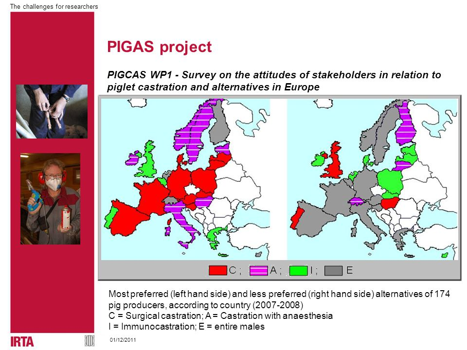 The challenges for researchers 01/12/2011 PIGCAS WP1 - Survey on the attitudes of stakeholders in relation to piglet castration and alternatives in Europe Most preferred (left hand side) and less preferred (right hand side) alternatives of 174 pig producers, according to country (2007-2008) C = Surgical castration; A = Castration with anaesthesia I = Immunocastration; E = entire males PIGAS project