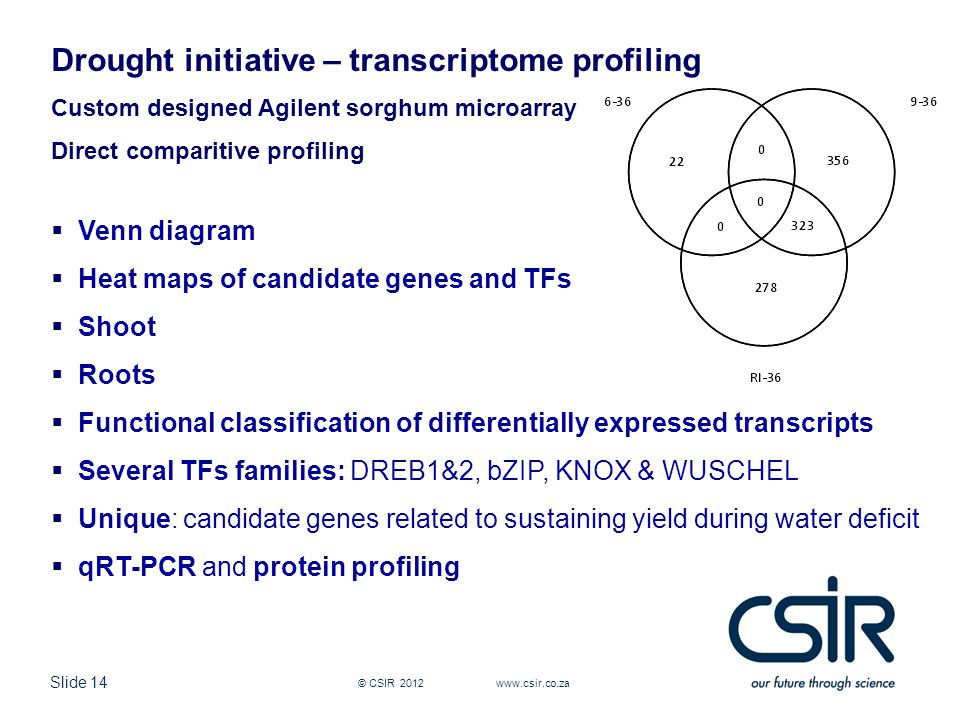 Slide 14 © CSIR Drought initiative – transcriptome profiling Custom designed Agilent sorghum microarray Direct comparitive profiling  Venn diagram  Heat maps of candidate genes and TFs  Shoot  Roots  Functional classification of differentially expressed transcripts  Several TFs families: DREB1&2, bZIP, KNOX & WUSCHEL  Unique: candidate genes related to sustaining yield during water deficit  qRT-PCR and protein profiling