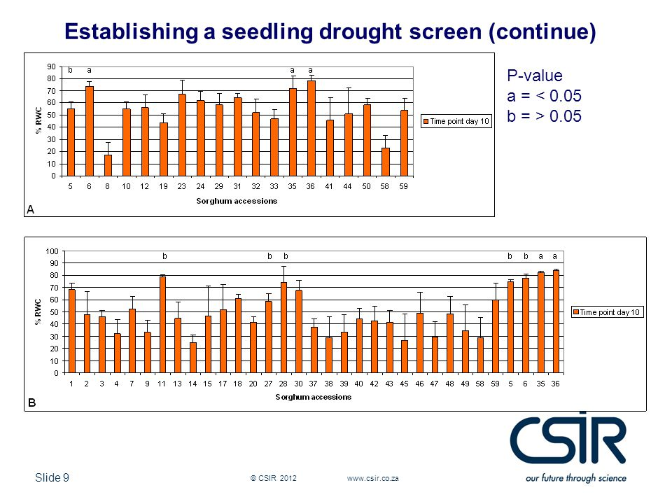 Slide 9 © CSIR Establishing a seedling drought screen (continue) P-value a = < 0.05 b = > 0.05