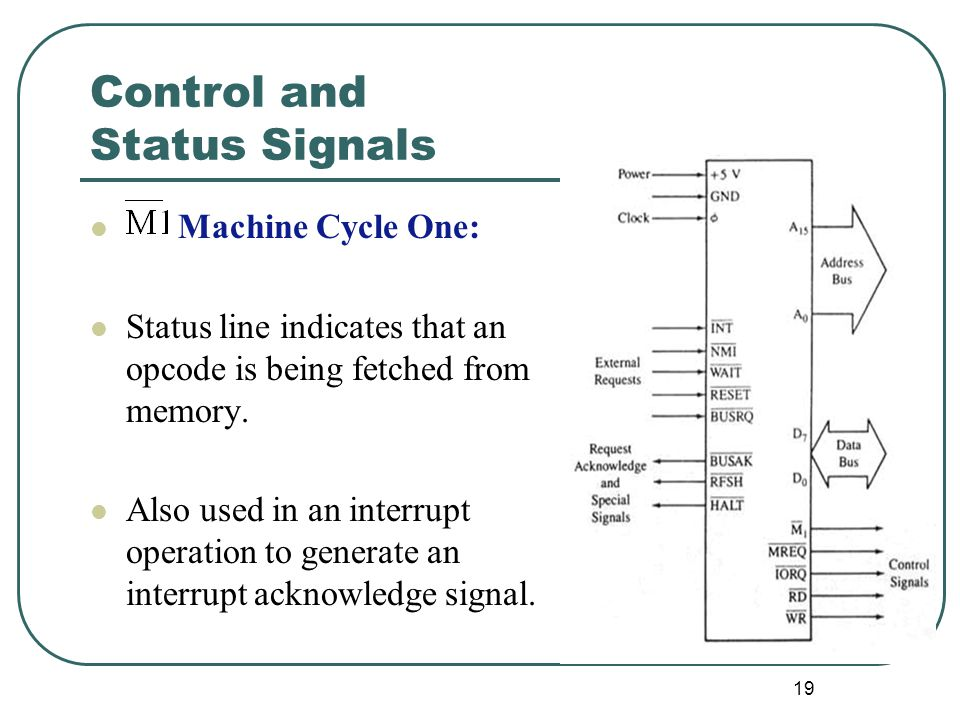Control and Status Signals Machine Cycle One: Status line indicates that an opcode is being fetched from memory. Also used in an interrupt operation t
