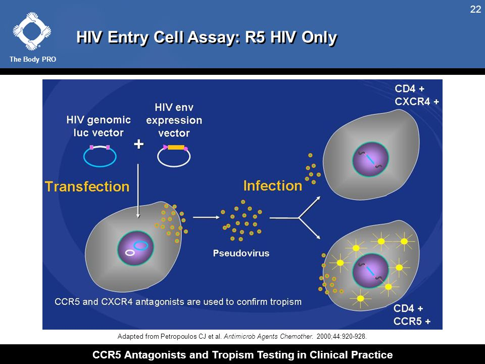 The Body PRO CCR5 Antagonists and Tropism Testing in Clinical Practice 22 HIV Entry Cell Assay: R5 HIV Only Adapted from Petropoulos CJ et al. Antimic