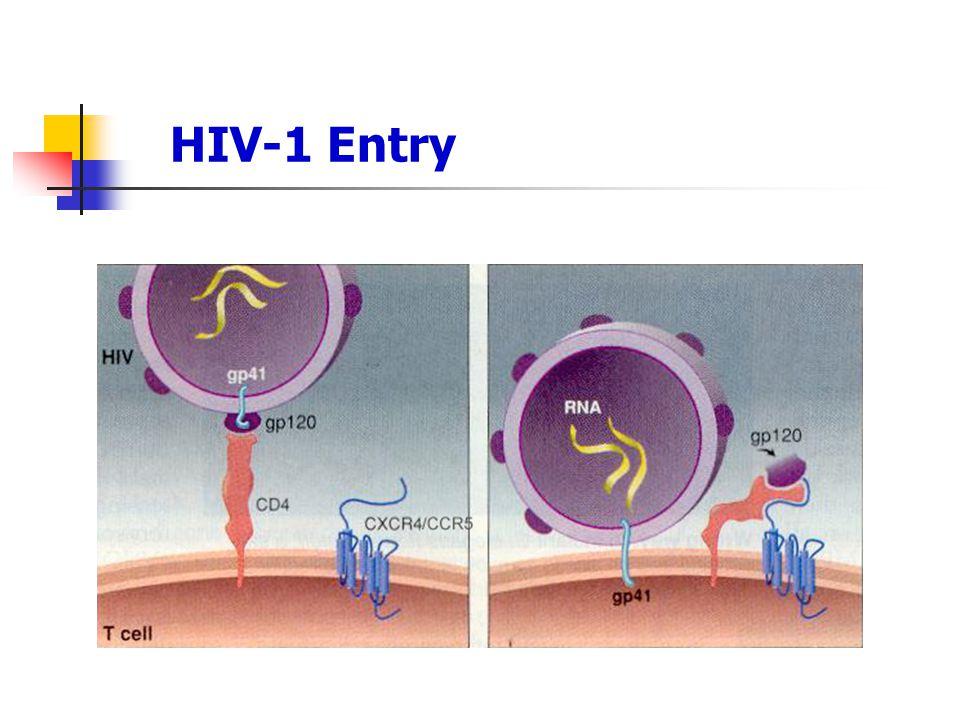HIV-1 Entry