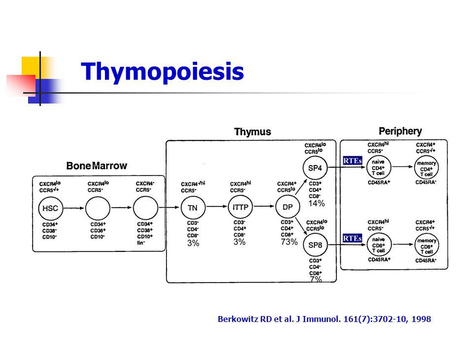 Thymopoiesis Berkowitz RD et al. J Immunol. 161(7):3702-10, 1998