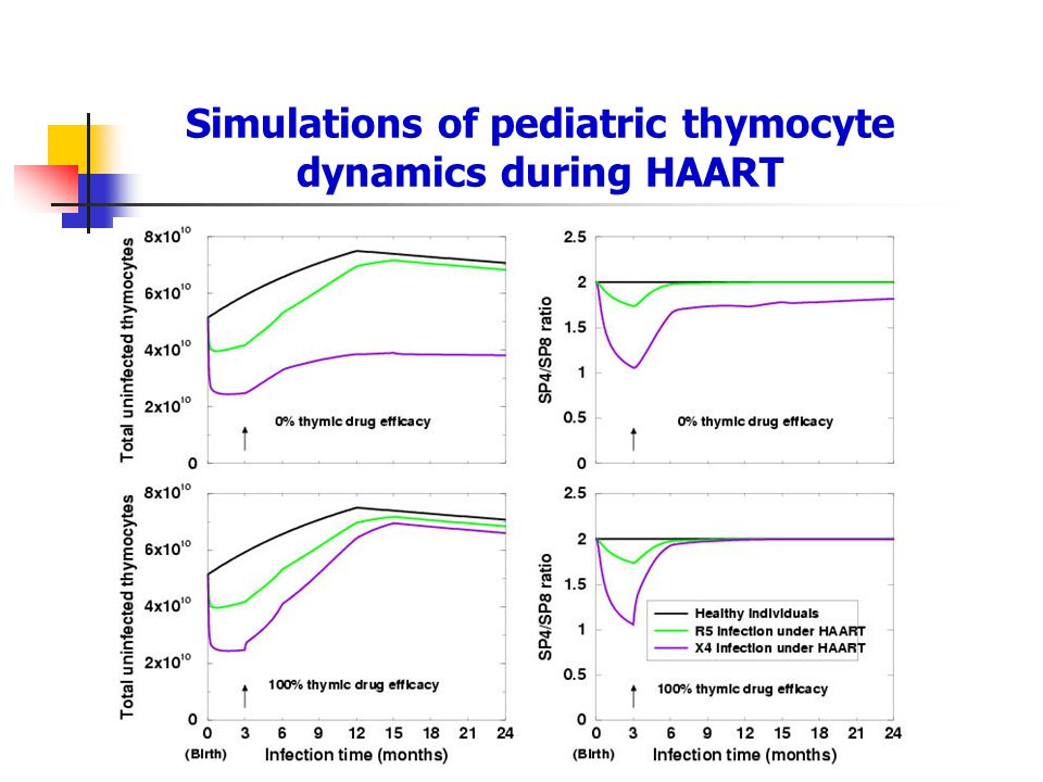Simulations of pediatric thymocyte dynamics during HAART