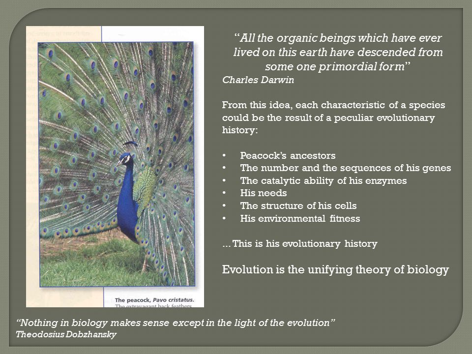 """""""All the organic beings which have ever lived on this earth have descended from some one primordial form"""" Charles Darwin From this idea, each characte"""