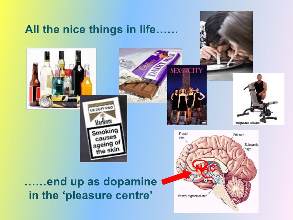 normal reponse regular use reduced response smoker alcohol obesity cocaine ….but too much and it stops being rewarding….