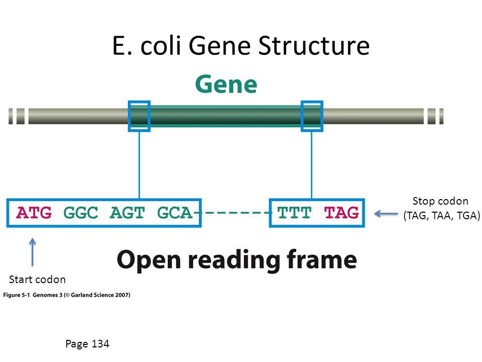 E. coli Gene Structure Page 134 Start codon Stop codon (TAG, TAA, TGA)