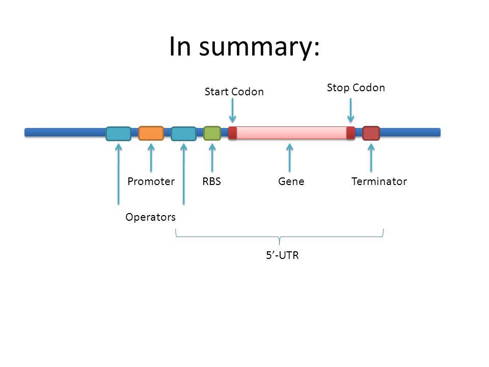 In summary: GeneTerminatorRBSPromoter Operators Start Codon Stop Codon 5'-UTR