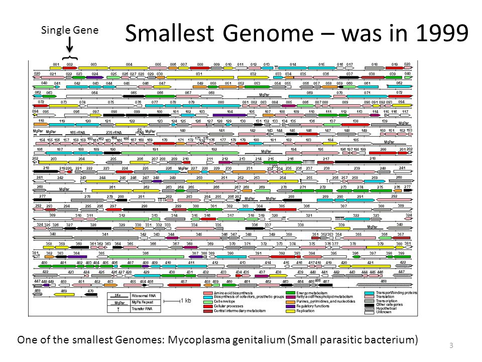 Smallest Genome Total genes: 521 Protein coding genes: 482 tRNA and rRNA: 39 This genome is of interest to synthetic biology because Craig Venter wants to use this organism as the basis for a minimal organism for genetic engineering.