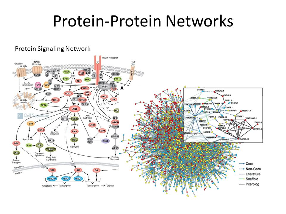 Protein-Protein Networks Protein Signaling Network