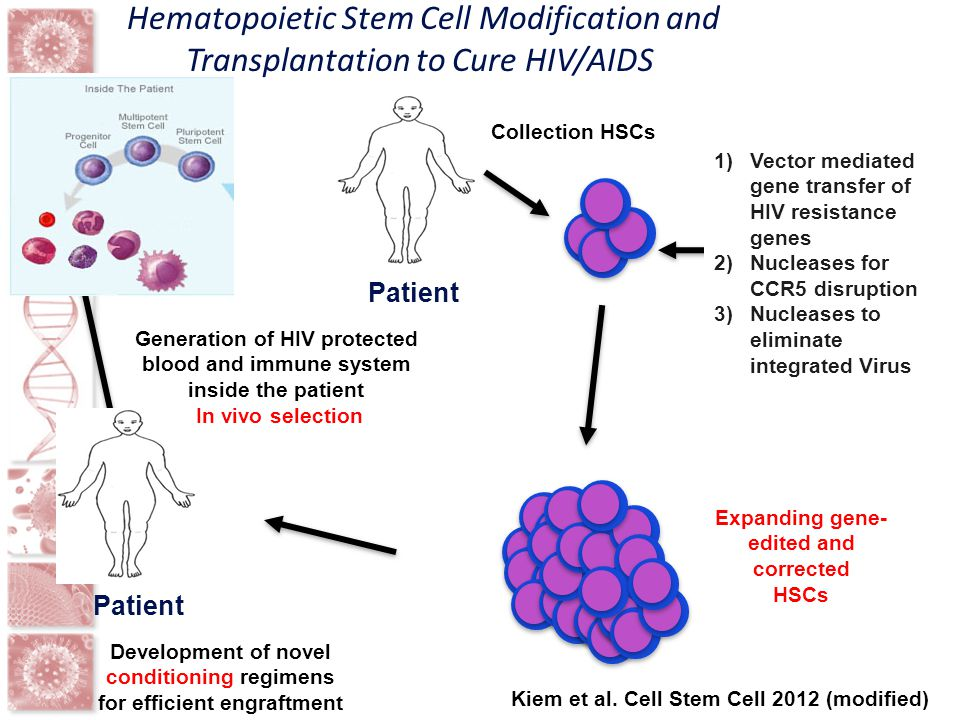 Expanding gene- edited and corrected HSCs Development of novel conditioning regimens for efficient engraftment Generation of HIV protected blood and i