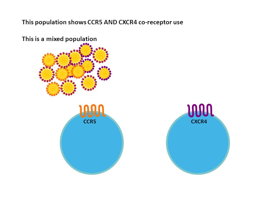 This population shows CCR5 AND CXCR4 co-receptor use This is a mixed population Demonstration of mixed virus population CCR5 CXCR4