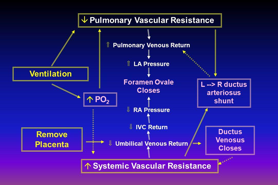  PO 2 L --> R ductus arteriosus shunt Ventilation Remove Placenta Ductus Venosus Closes  Systemic Vascular Resistance  Umbilical Venous Return  IVC Return  RA Pressure  Pulmonary Venous Return  LA Pressure Foramen Ovale Closes  Pulmonary Vascular Resistance