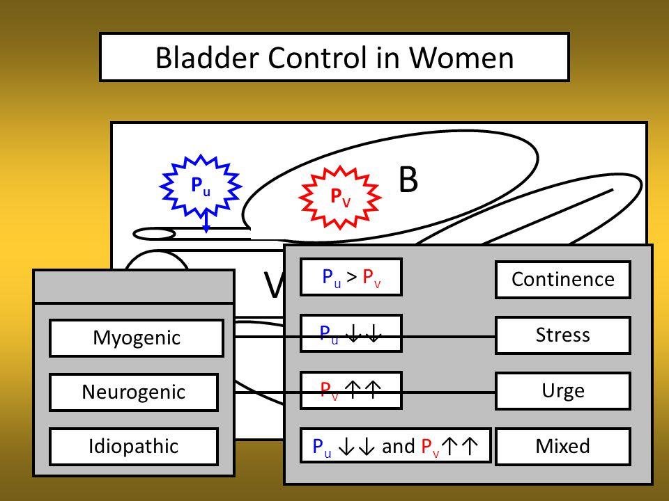 Bladder Control in Women V B R PVPV PuPu P u > P v Continence P u ↓↓ Intrinsic Extrinsic P v ↑↑ P u ↓↓ and P v ↑↑ Stress Urge Mixed Myogenic Neurogenic Idiopathic