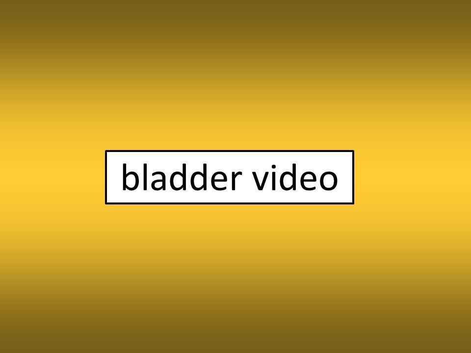 bladder video