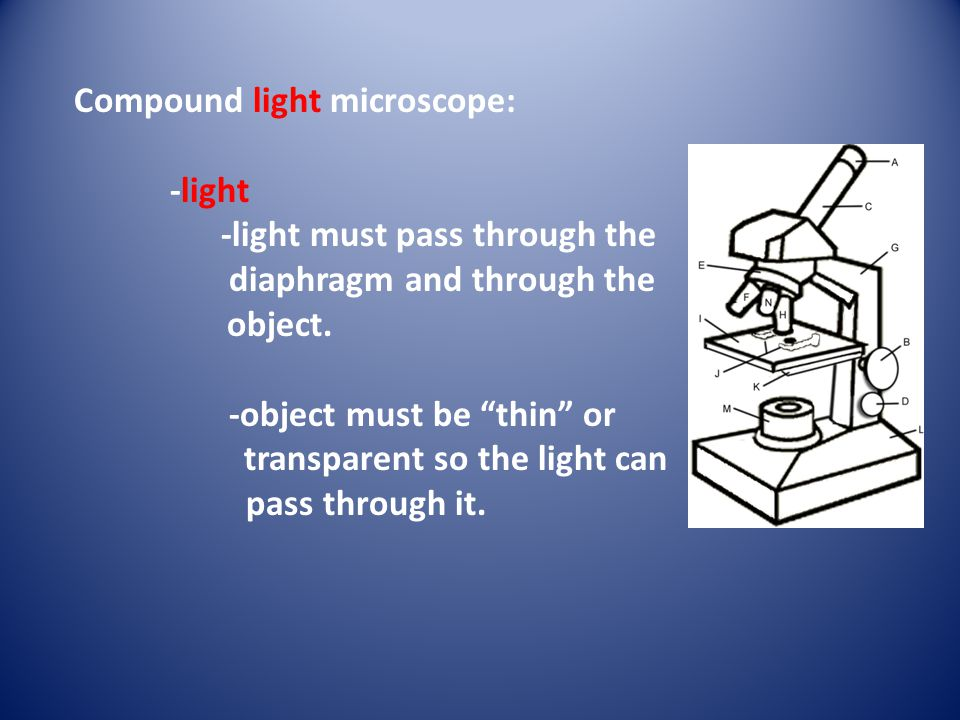 "Compound light microscope: -light -light must pass through the diaphragm and through the object. -object must be ""thin"" or transparent so the light ca"