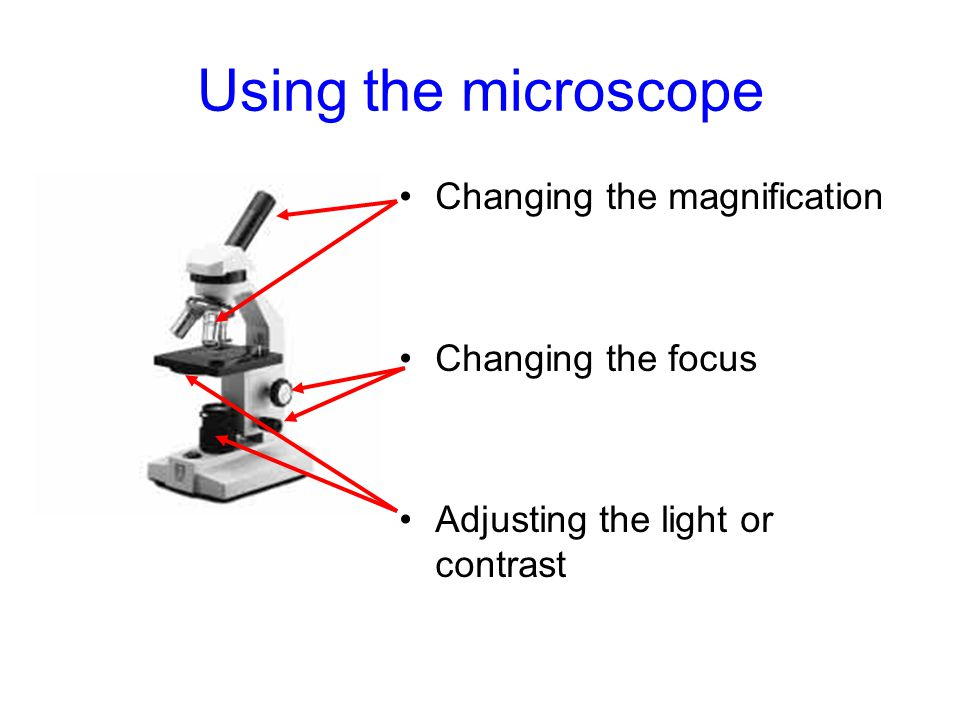 Using the microscope Changing the magnification Changing the focus Adjusting the light or contrast
