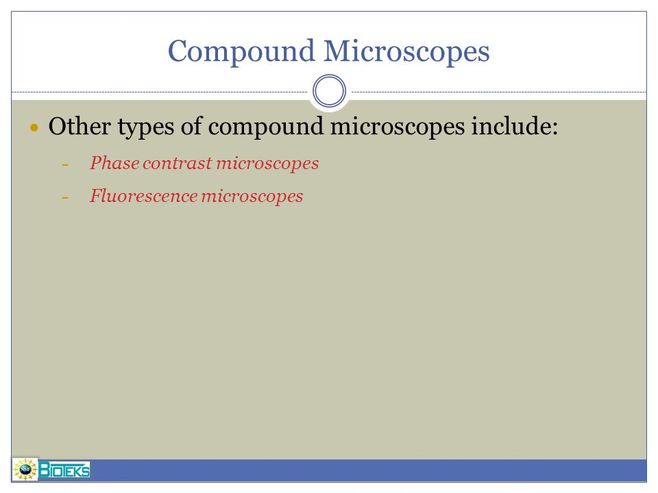 Compound Microscopes Other types of compound microscopes include: – Phase contrast microscopes – Fluorescence microscopes
