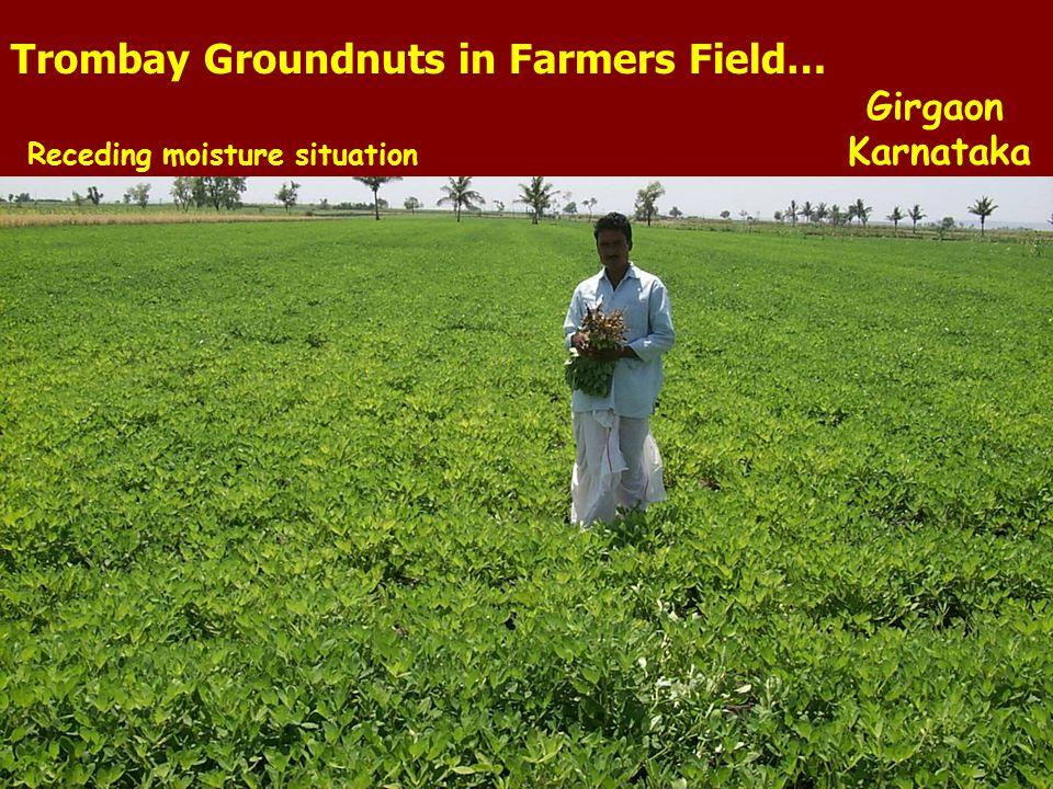 15 th July 06 Trombay Groundnuts in Farmers Field… Girgaon Receding moisture situation Karnataka