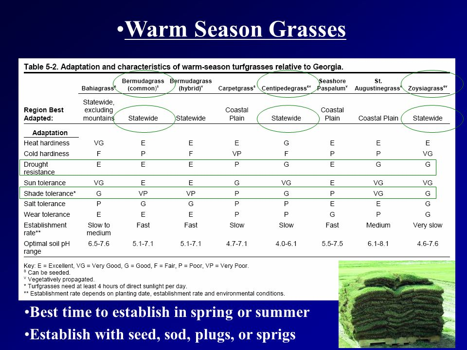 Warm Season Grasses Best time to establish in spring or summer Establish with seed, sod, plugs, or sprigs