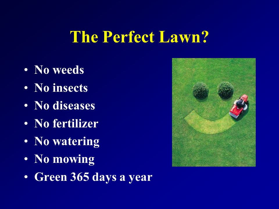 Non-Selective Herbicides in Lawns.