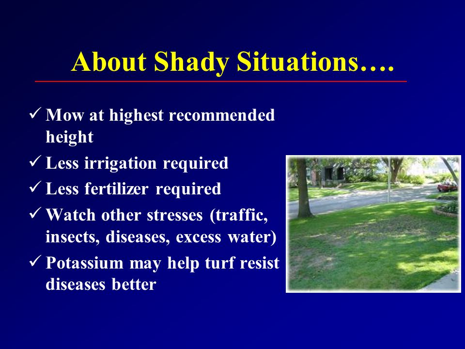 About Shady Situations….