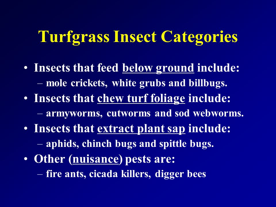 Turfgrass Insect Categories Insects that feed below ground include: –mole crickets, white grubs and billbugs.