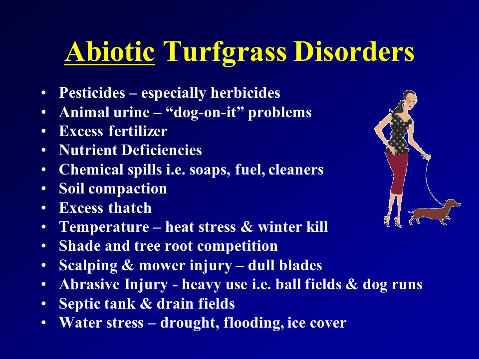 Abiotic Turfgrass Disorders Pesticides – especially herbicides Animal urine – dog-on-it problems Excess fertilizer Nutrient Deficiencies Chemical spills i.e.